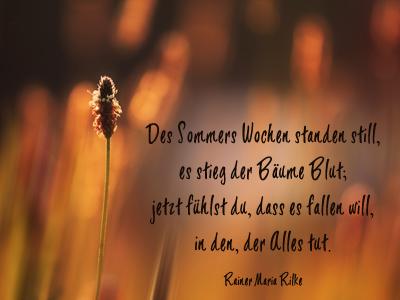 Schöne Zitate Sommer | freunde zitate weisheiten