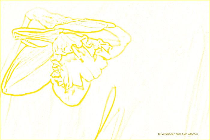 einfache ausmalbilder mit blumen und natur - zeichnungen